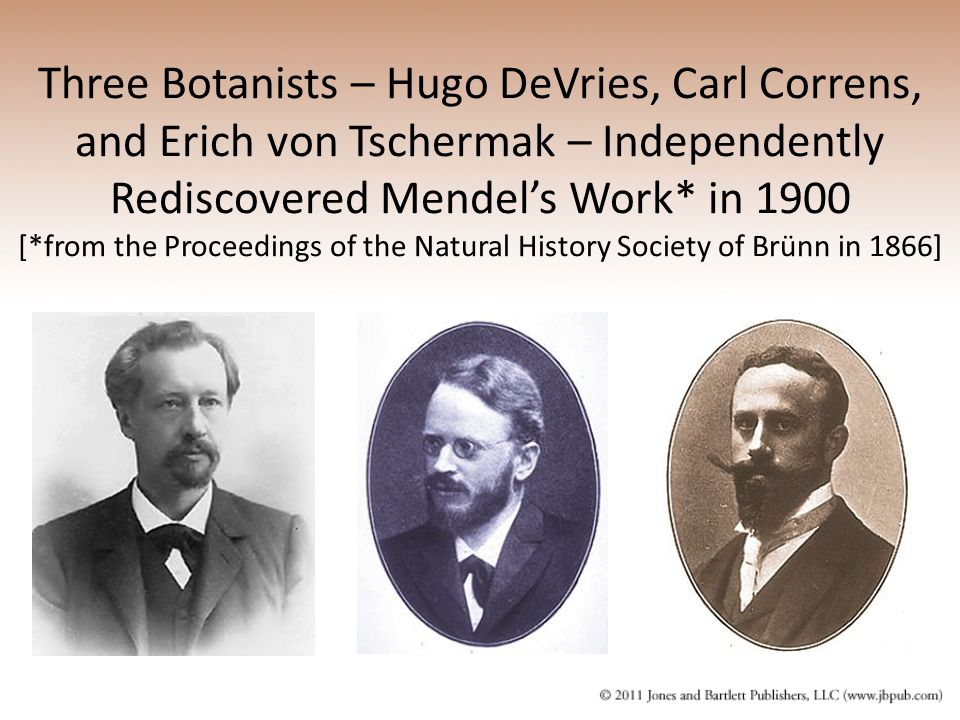 Three Botanists – Hugo DeVries, Carl Correns, and Erich von Tschermak – Independently Rediscovered Mendel's Work* in 1900 [*from the Proceedings of the Natural History Society of Brünn in 1866]